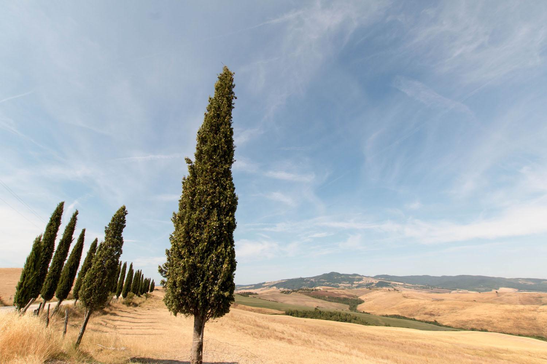 Typisch toskanische Landschaft rund um Volterra