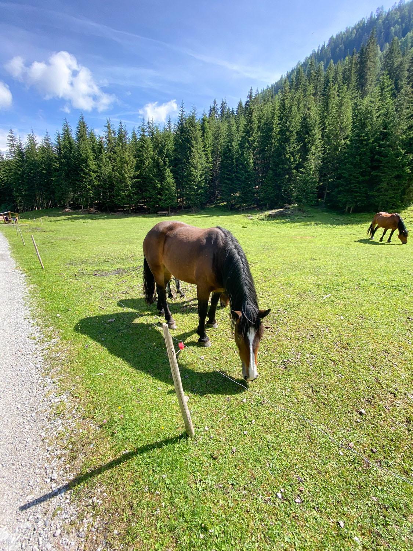 Weiden mit Pferden